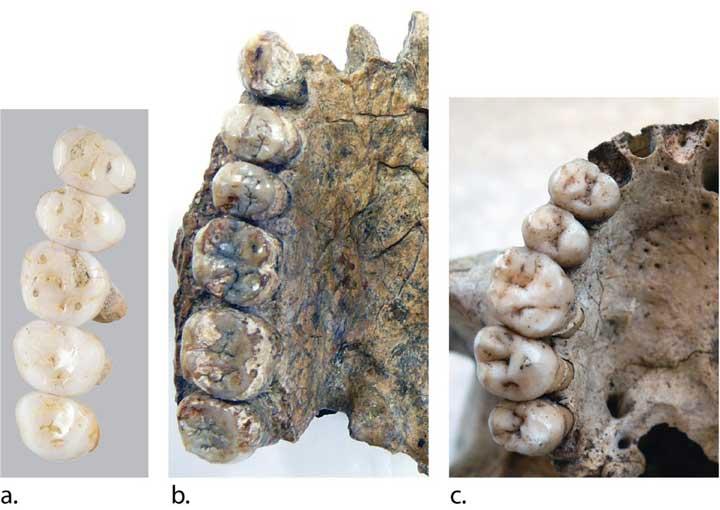 هومو لوزونسیس، گونهای کاملا متمایز است